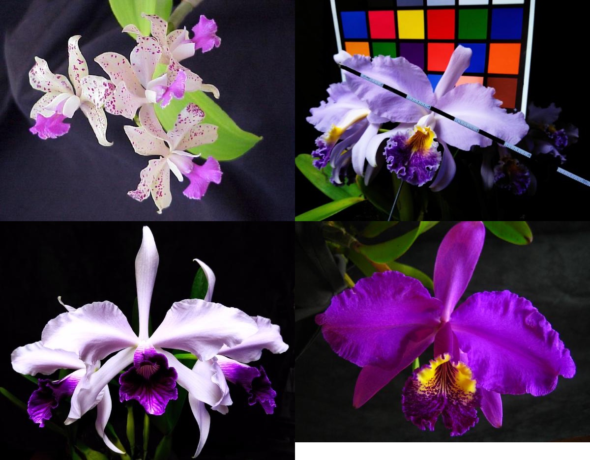 sample orchids